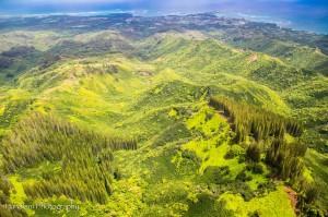 Maui Photographer-18