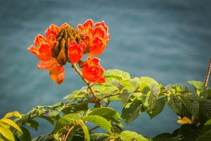 Maui photographer-6