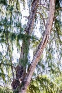 Kanaha Beach Park-11