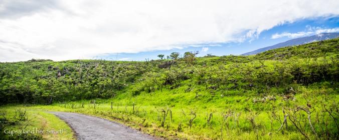 Road from Hana-15