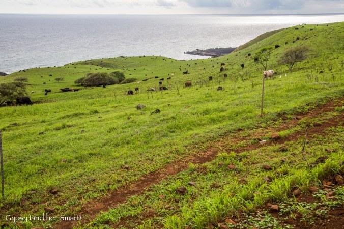 Road from Hana-17