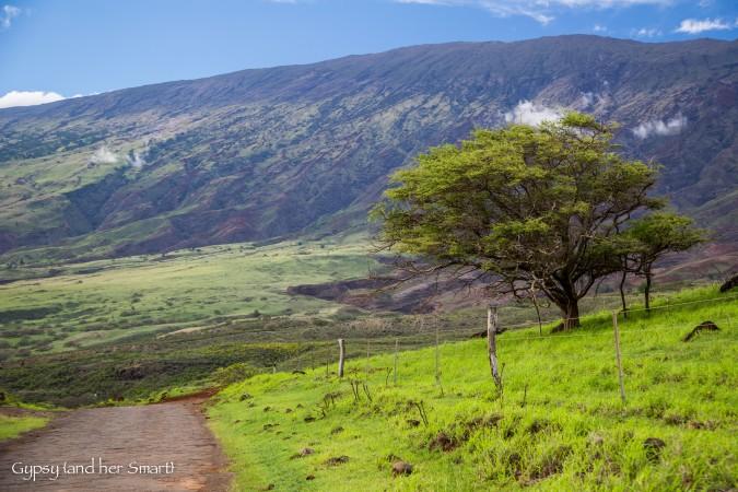 Road from Hana-19